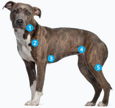 Top Veterinary Articles of the Week: Enlarged Lymph Nodes, Dewclaws, and more