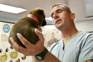 4 Simple Tasks That Could Save You Thousands At The Vet