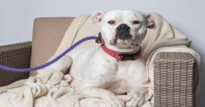 You Helped the Shelter, Now Let's Get Lili Adopted!