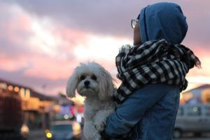 The Way Dogs Choose Their Favorite Person May Surprise You