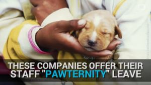 """Best Employee Benefit Ever? Some Companies Now Offer Paid """"Pawternity"""" Leave"""