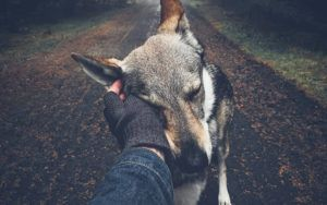 Photographer Finds His Calling In Nature With His Canine Companion