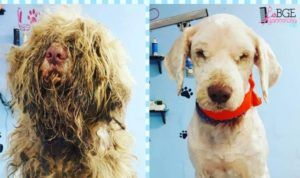 Groomer Opens Shop At Midnight To Care For Severely Matted Stray