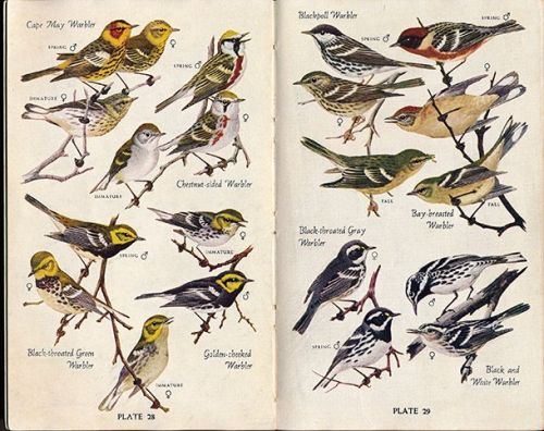 National Audubon Society Birds of North America: A Guide Review