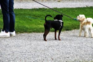New Illinois Law Makes Pet Owners Responsible For Their Dogs' Actions
