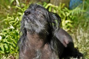 Common Health Issues Senior Dogs Face During Different Seasons And What To Do