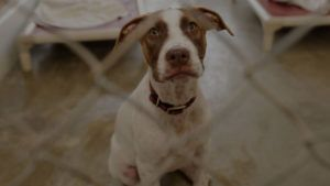 Help Make a Shelter Dog's Christmas Wish Come True
