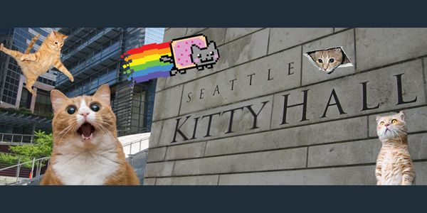 """Want to cuddle a kitten? Come to """"Kitty Hall"""" on Thursday, Aug. 30"""