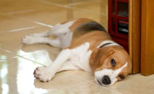 Gastrointestinal Obstructions In Dogs: What Every Owner Needs To Know