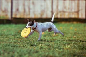 5 Tips For Keeping Your Dog In Great Shape