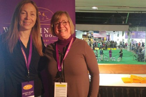 An Old Hound, A New Hound, and a 'Coy-ker-I can't-pronounce- it-hond': 143rd Annual Westminster Dog Show