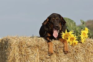 15 Common Plants That Are Safe For Dogs To Be Around