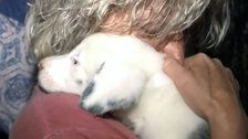 Deaf Puppy Rescued After Spending 30 Hours In 50-Foot Hole