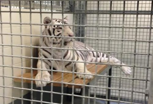Animal Legal Defense Fund Sues Landry's Inc. for Endangered Species Act Violations