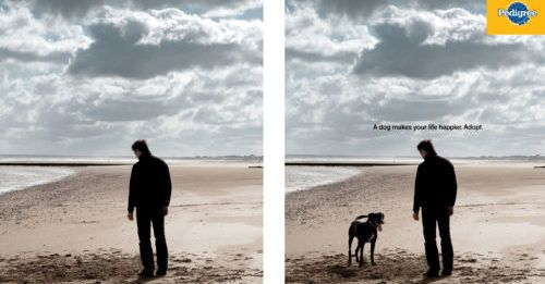Powerful Ad Campaign Shows How Dogs Can Change Our Lives