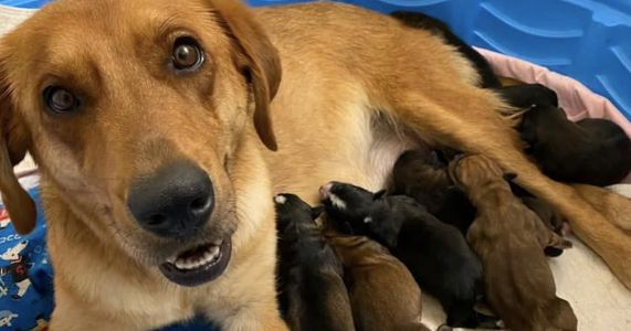 Maternity Ward For Rescue Dogs Saves Thousands Of Moms And Pups