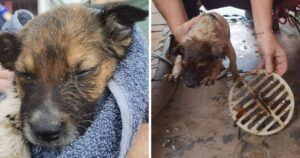 """""""Guardian Angel"""" Helps Save Tiny Puppy Stuck In Drain"""