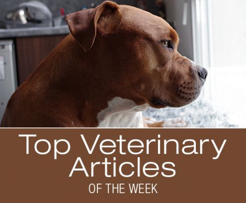 Top Veterinary Articles of the Week: Coughing, Fungal Infections, and more