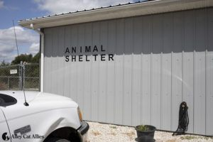 Alley Cat Allies Demands Accountability and Reforms After Cats Put to Death in Indiana Shelter's Freezer