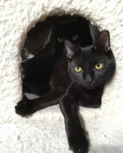 How many kitties can fit inside a cat tree? Brother P and 3P say