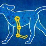 Animals as a Gateway to Science
