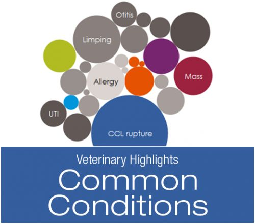 Veterinary Highlights: Top Common Conditions in Small and Large Dogs According to Trupanion Claims