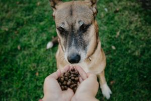 Top 4 Dog Foods That Have Never Been Recalled