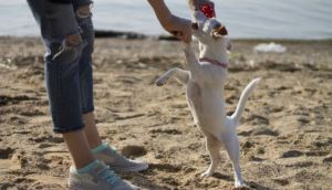 Do Dogs Play Favorites When It Comes To Their Humans?