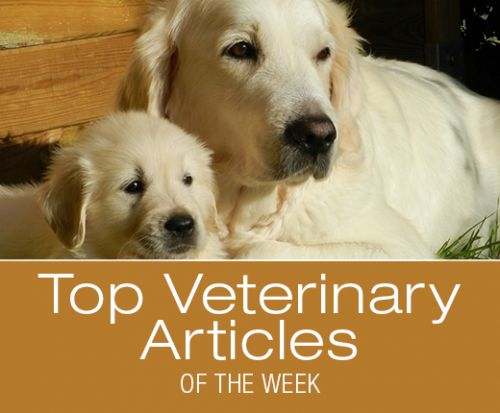 Top Veterinary Articles of the Week: Flea and Tick Products Warning, Immunotherapy in Cancer Treatment, and more