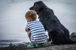 Does Your Dog Love the Water? Beware Of This Hidden Danger!
