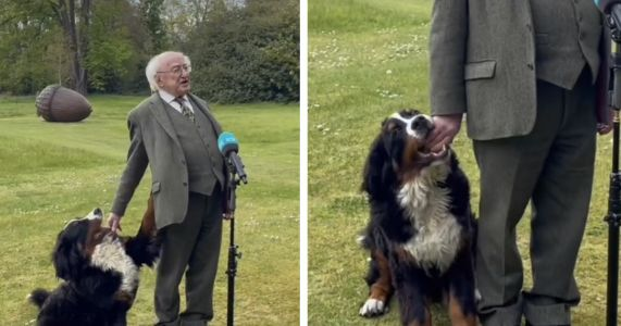 Irish President's Pup Steals The Spotlight During Somber Tribute