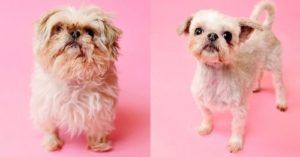 Group Of Lucky Shelter Dogs Get Impressive Makeover