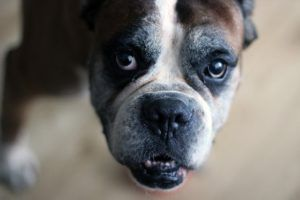 How Much Omega-3 Should I Give My Dog? The Surprising Answer