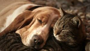 The End-Of-Life Option That All Pet Parents Should Consider