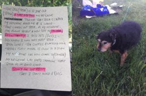 """Senior Dog Abandoned In Field With Heartless Note: """"I Don't Need A Dog"""""""