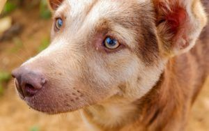 New Study Shows That Dogs May Be Better At Rationalizing Than Humans
