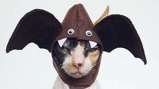 These 25 Cat Halloween Costumes Are Pure Instagram Gold