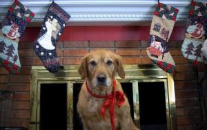5 Stocking Stuffers To Delight Your Pup & Brighten A Shelter Dog's Holiday