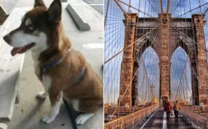 Missing NY Dog Located 18 Months Later & 1100 Miles Away In Florida