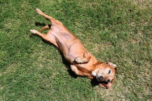 Tips For Helping Dogs With Sensitive Stomachs