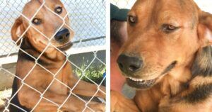 Abandoned In July Heat, Buddy And Red Rosie Were Saved And You Helped