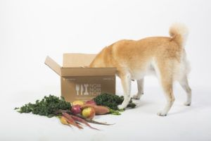Health Is Wealth, And The Same Can Be Said For Your Dog