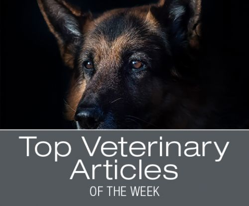 Top Veterinary Articles of the Week: Bladder Stones and Infections, Motion Sickness, and more