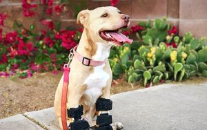 Rescue Bank Wants To Go Above And Beyond For National Feed A Rescue Pet Week!