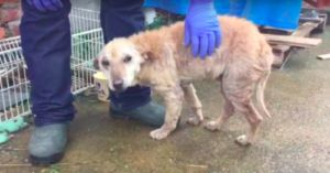 See The Amazing Transformation Of This Sick, Abandoned Dog That Was Set To Be Euthanized