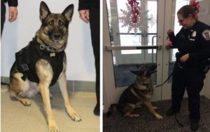 "Man Who Stole Police K9's Ball Is Cited For ""Larceny Of Police Property"""
