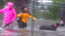 Reporter Interrupts Livestream To Help Rescue Dog From Hurricane Florence Flooding