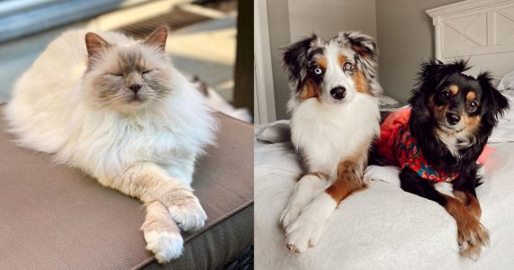 Crisscross Applesauce: 23 Adorable Dogs and Cats Crossing Their Paws For The Camera