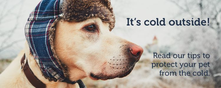 Seattle Animal Shelter's 11 tips for protecting pets from the cold