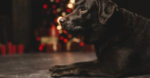 10 Thoughtful Memorial Gifts for Someone Who Recently Lost a Dog